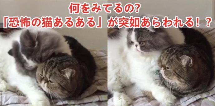 何をみてるの?「恐怖の猫あるある」が突如あらわれる!??