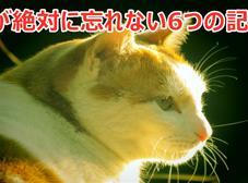 猫の気持ちと習性・猫が絶対に忘れない6つの記憶!